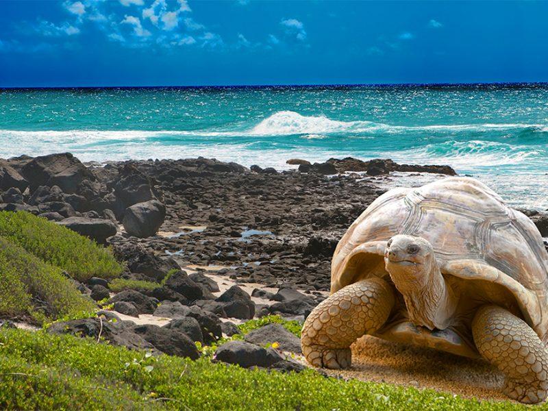 Paquetes Galapagos